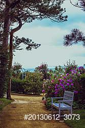 Flowers in Dior's Garden