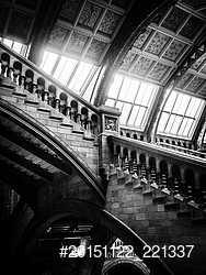 Upstairs natural history